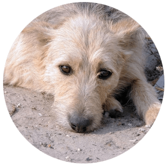 Helping Hands & Healing Tails Dogs