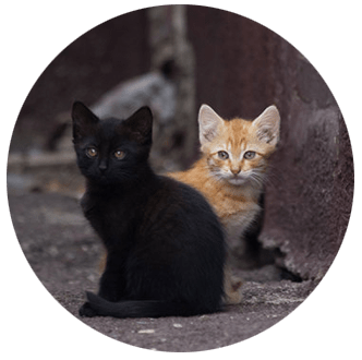 Helping Hands & Healing Tails Cats